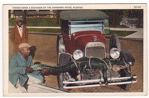 Vintage Postcard Florida Gator Souvenir