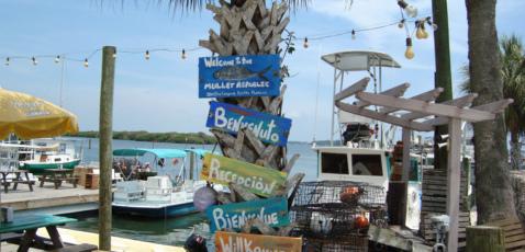Starfish Company Cortez Florida