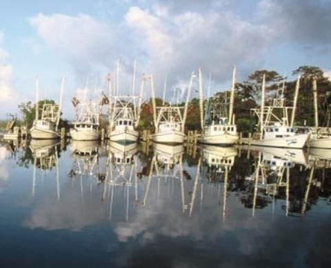 Apalachicola Florida fishing fleet