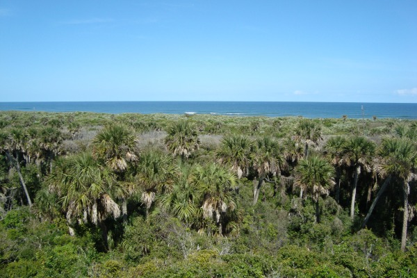 Canaveral National Seashore Atlantic Ocean from Turtle Mound