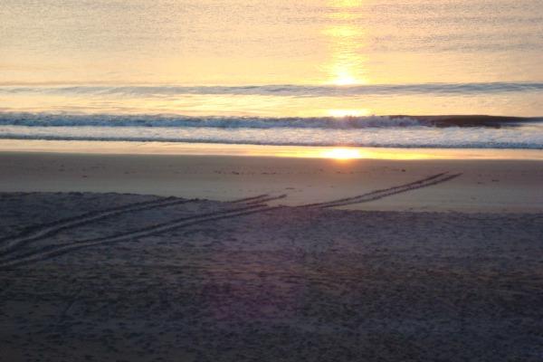 Sea turtle tracks on Florida beach at Indialantic