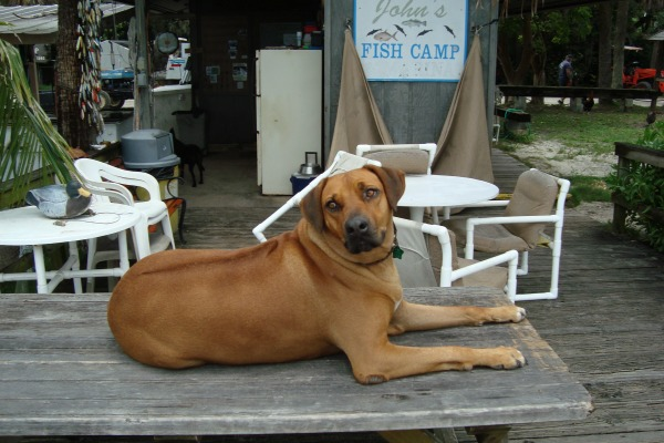 Honest John's Fish Camp is always home to at least one good old dog