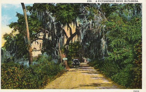 Vintage Postcard Miami, Florida