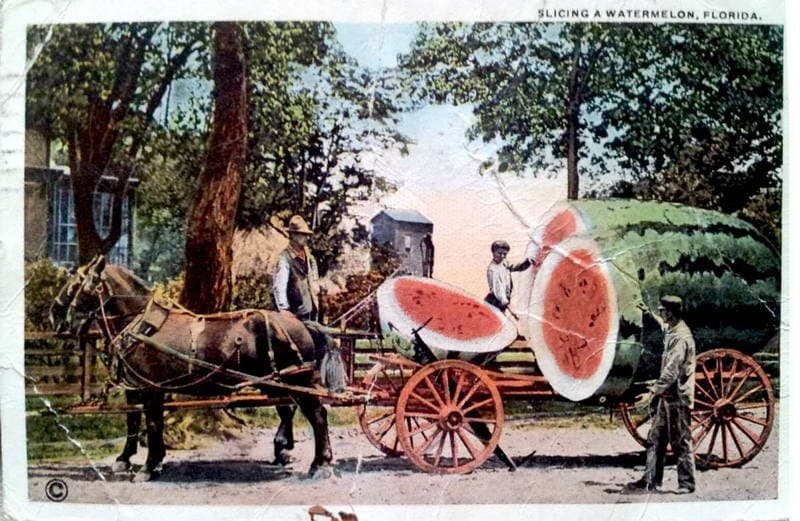 Vintage Postcard Giant Watermelon