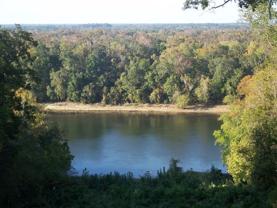 Torreya State Park and Apalachicola River near  Bristol Florida