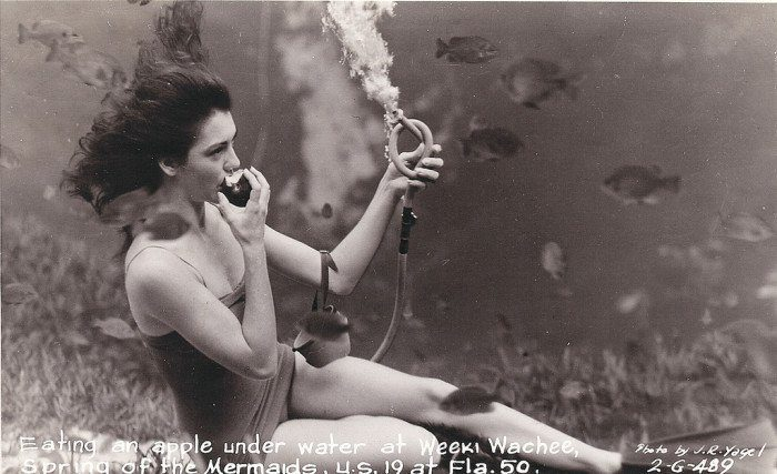 Vintage Postcard Weeki Wachee Springs Mermaid
