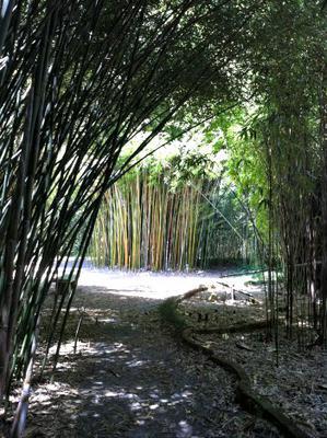 bamboo gardens - Gainesville Botanical Garden