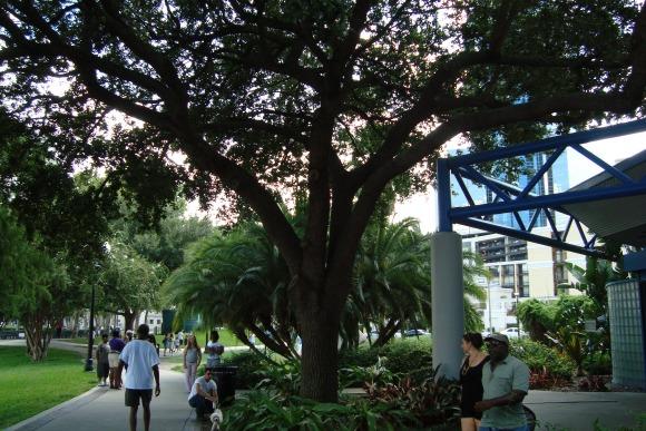 Orlando Lake Eola Park