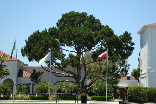 Montverde, Florida tree on the campus of Montverde Academy
