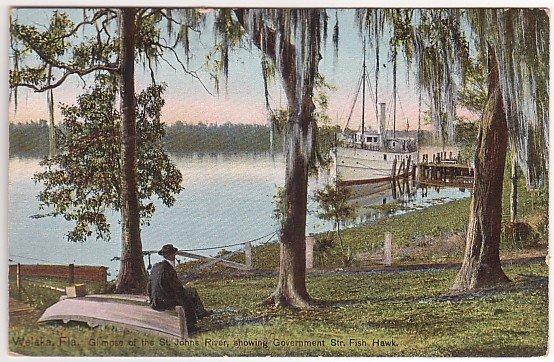 Vintage Postcard Welaka, Florida