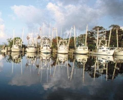 Apalachicola Florida fishing fleet
