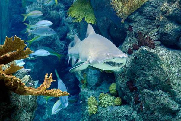 Florida Aquarium in Tampa, Florida