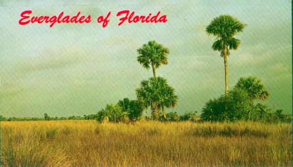 Florida Everglades Postcard