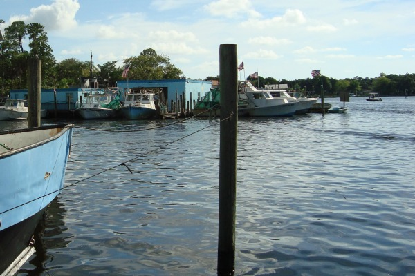On the Homosassa River