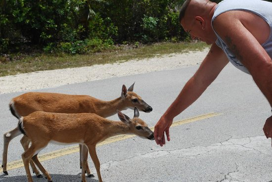 On the Way to Key West, Big Pine Key