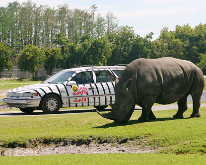 Rhino At Lion Country Safari