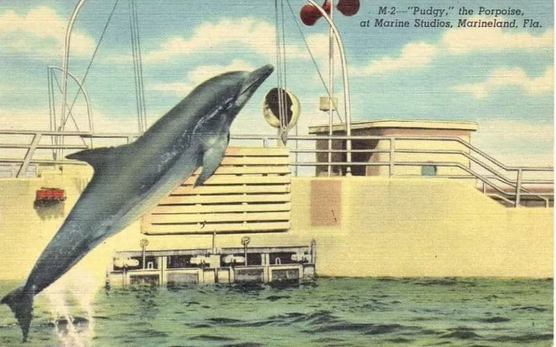 Pudgy the Porpoise is really a dolphin