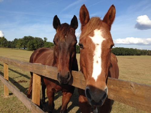 Mill Creek Retirement Home for Horses