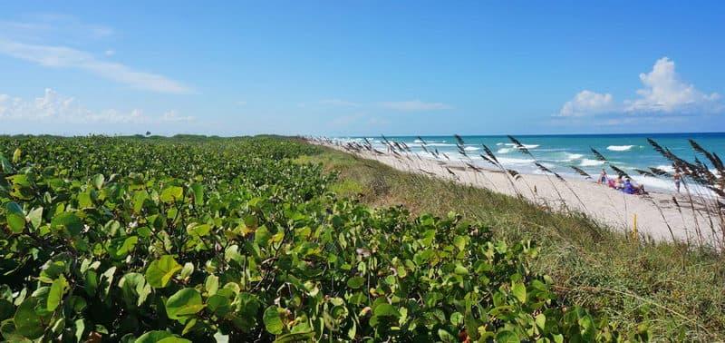 Playalinda Beach Sea Grapes and Sea Oats