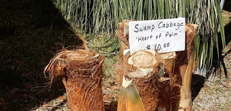 Swamp Cabbage Festival, LaBelle, Florida