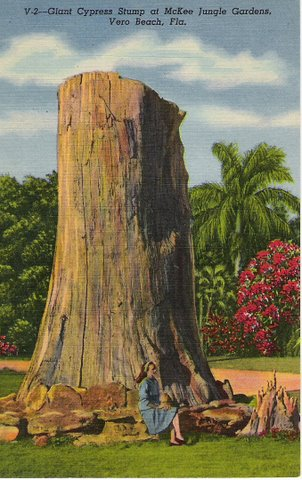 Vintage Postcard: McKee Jungle Gardens