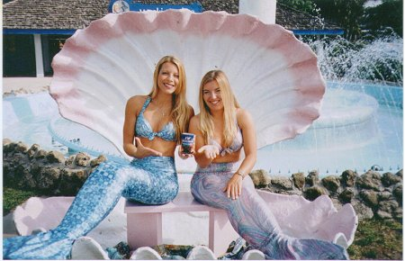 Florida Tourist Attractions Weeki Wachee Springs