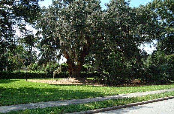 Orlando Big Tree Park