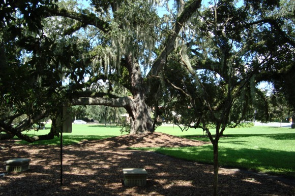 Orlando Constitution Green Park