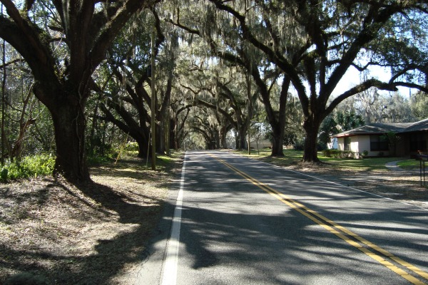 Canopied road into Floral City, Florida