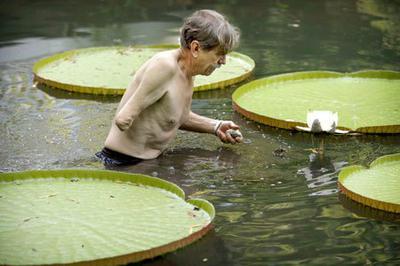 Goodman in lily pond
