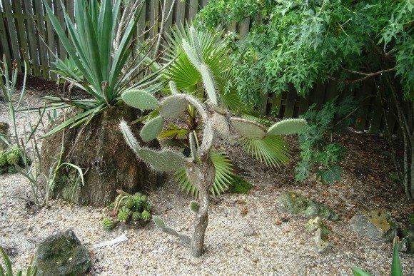 Leu Gardens Cactus Plant